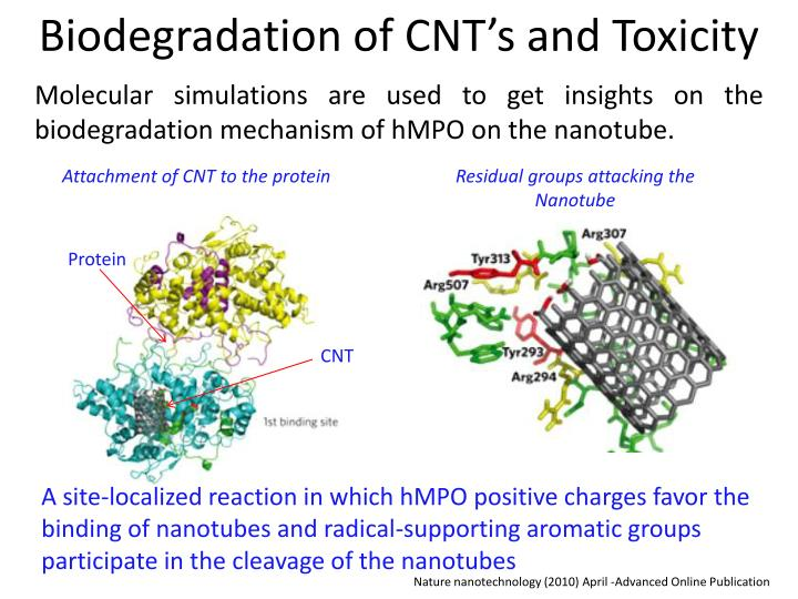 Biodegradation of CNT's and Toxicity