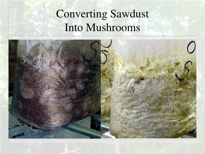 Converting Sawdust
