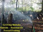 growing shiitake outside seasonal or forced fruiting