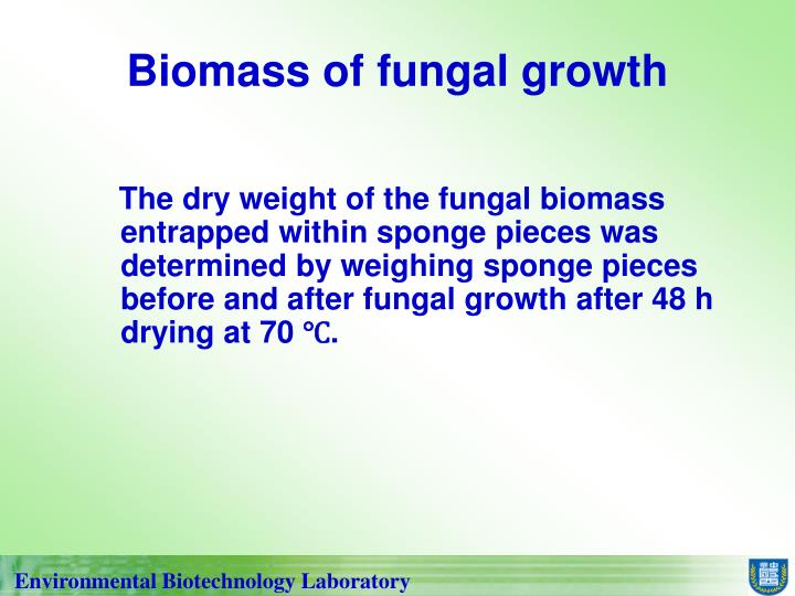 Biomass of fungal growth