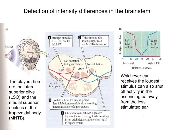 Detection of intensity differences in the brainstem