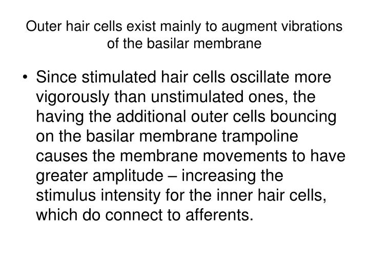 Outer hair cells exist mainly to augment vibrations of the basilar membrane