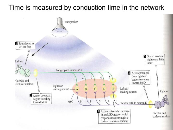 Time is measured by conduction time in the network