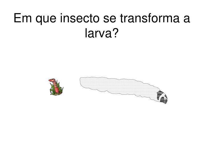 Em que insecto se transforma a larva?