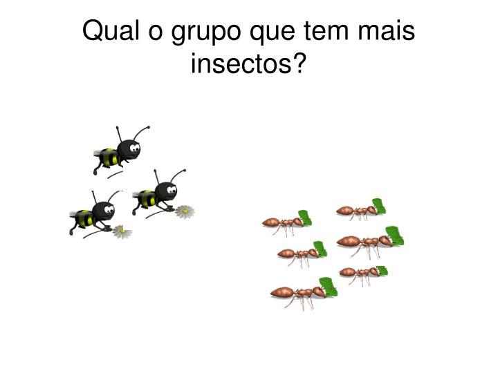Qual o grupo que tem mais insectos?