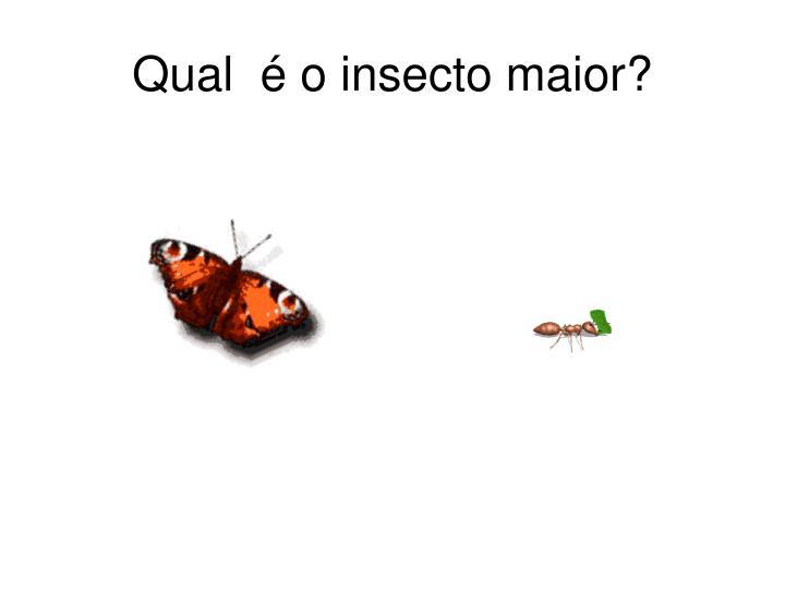 Qual  é o insecto maior?