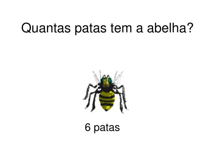 Quantas patas tem a abelha?