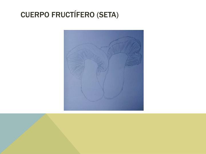 Cuerpo fructífero (Seta)