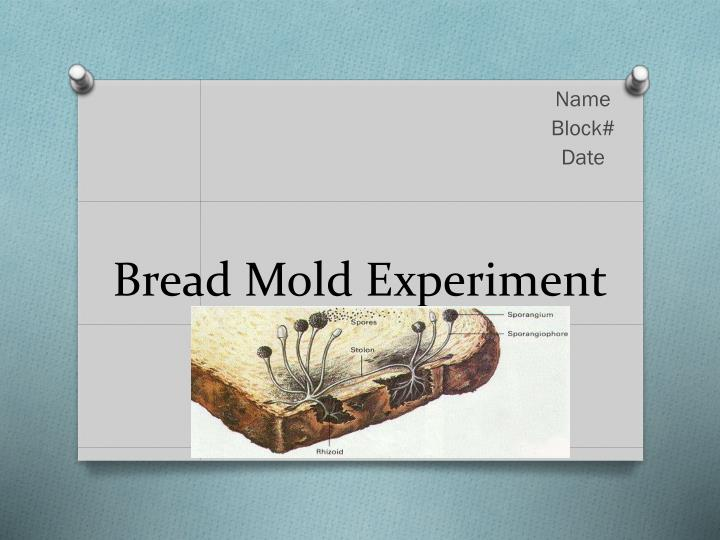 ppt - bread mold experiment powerpoint presentation