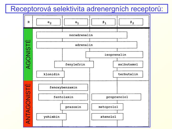 Receptorová selektivita adrenergních receptorů: