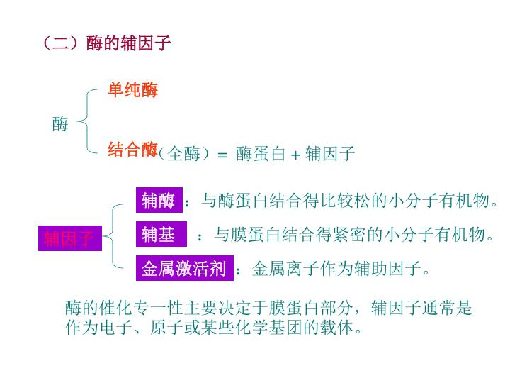 (二)酶的辅因子