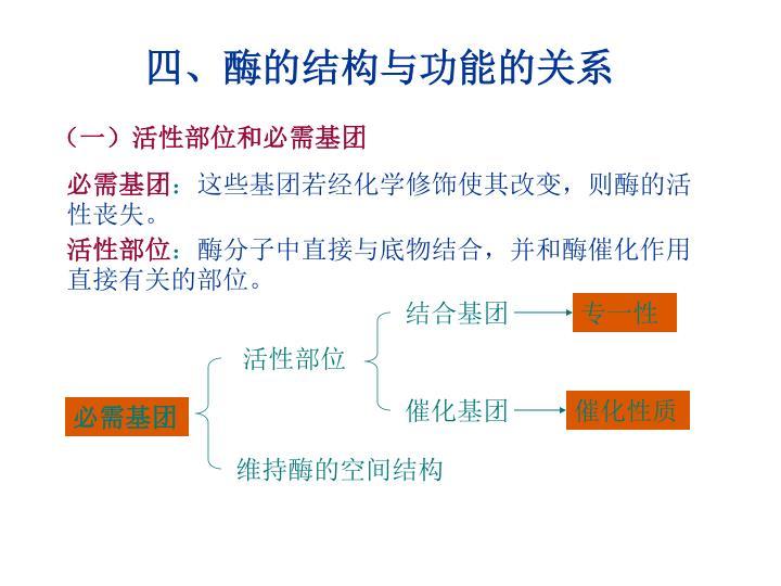 四、酶的结构与功能的关系