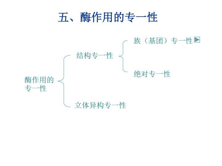 五、酶作用的专一性
