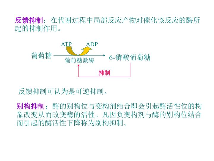 ATP          ADP