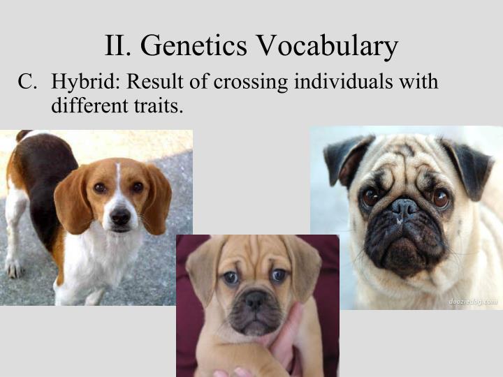 II. Genetics Vocabulary