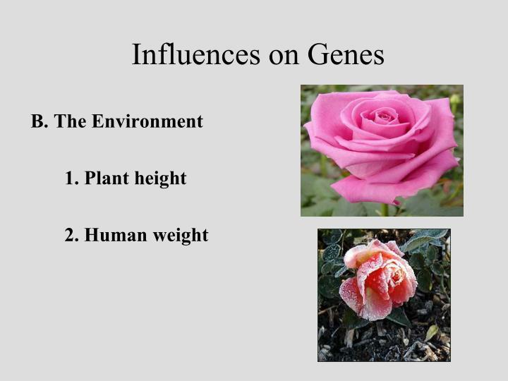 Influences on Genes