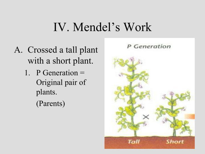 IV. Mendel's Work