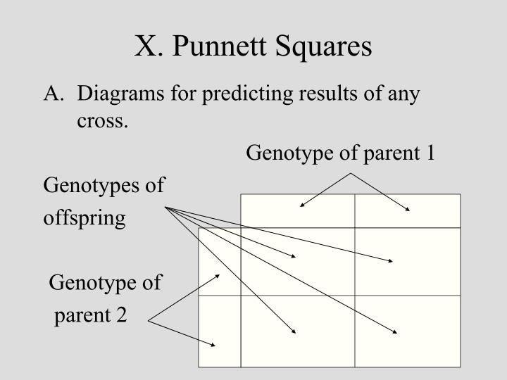 X. Punnett Squares