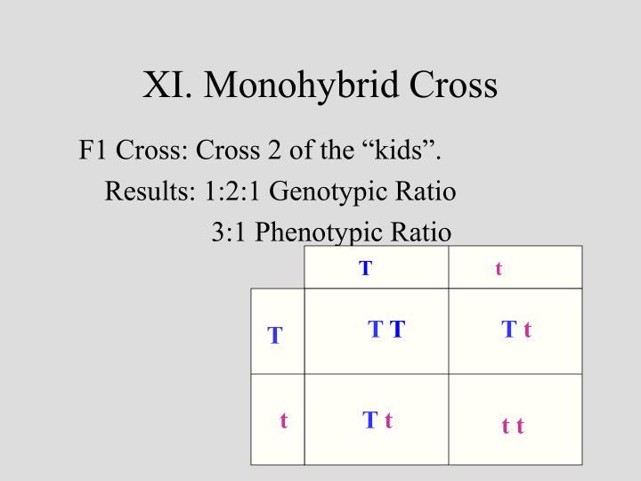 XI. Monohybrid Cross
