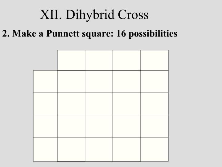 XII. Dihybrid Cross