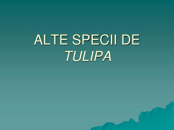 ALTE SPECII DE