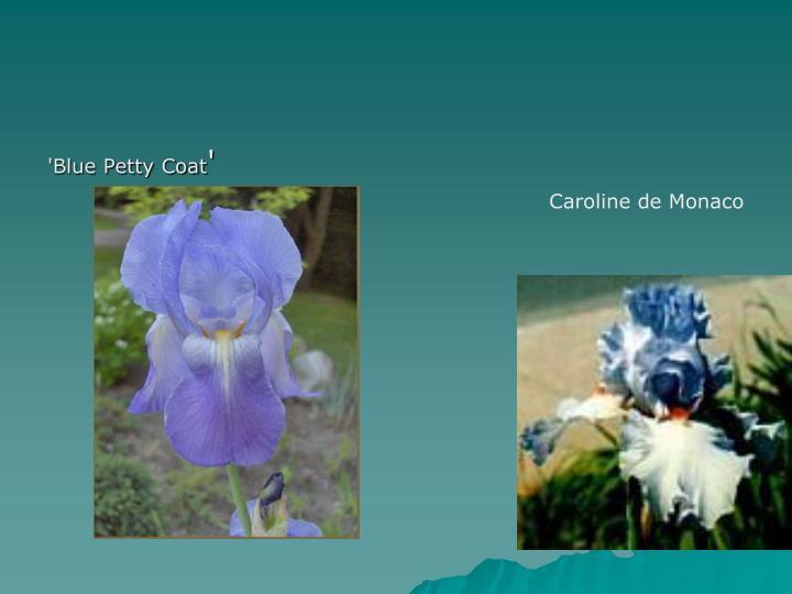 'Blue Petty Coat