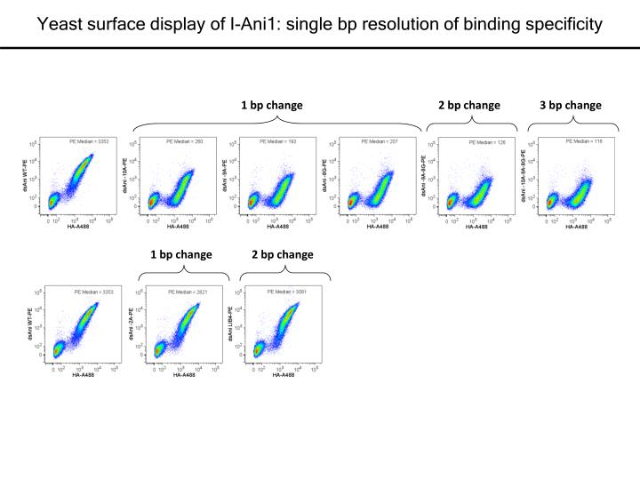 Yeast surface display of I-Ani1: single bp resolution of binding specificity