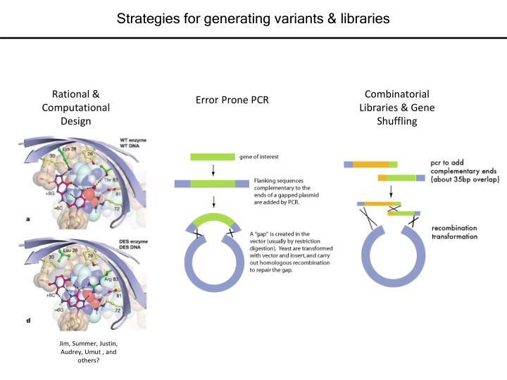 Strategies for generating variants & libraries