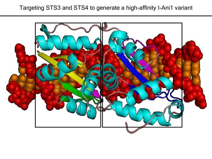 Targeting STS3 and STS4 to generate a high-affinity I-Ani1 variant