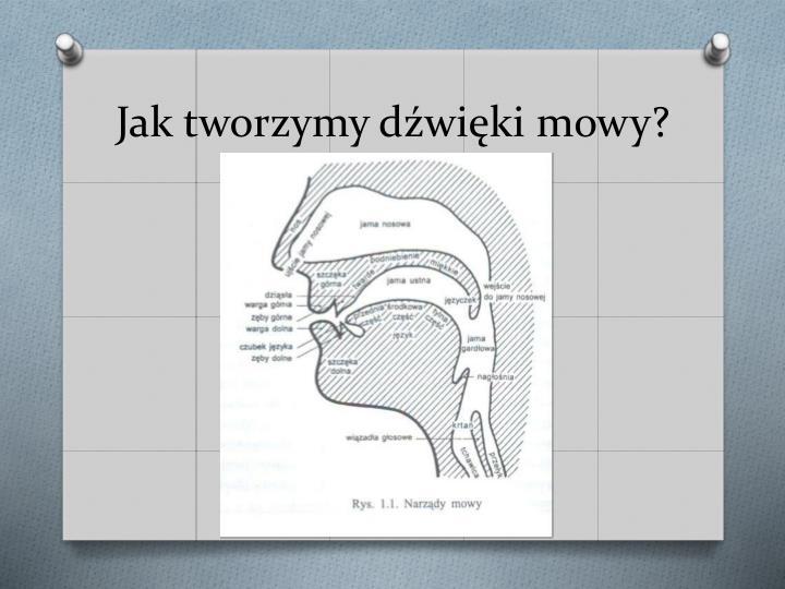 Jak tworzymy dźwięki mowy?