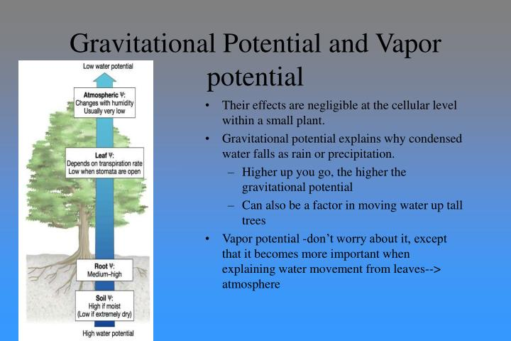 Gravitational Potential and Vapor potential