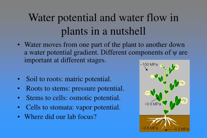 Water potential and water flow in plants in a nutshell