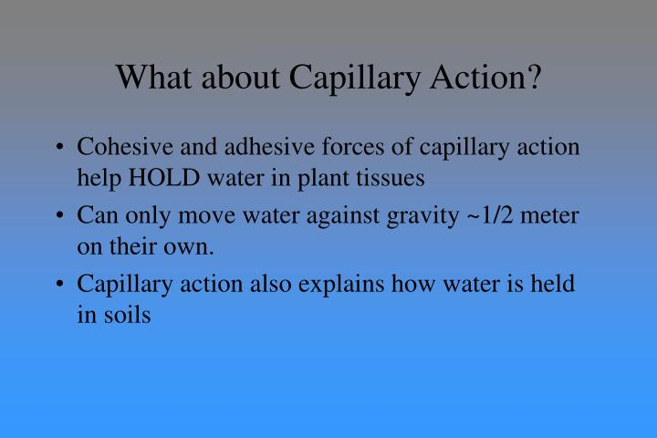 What about Capillary Action?