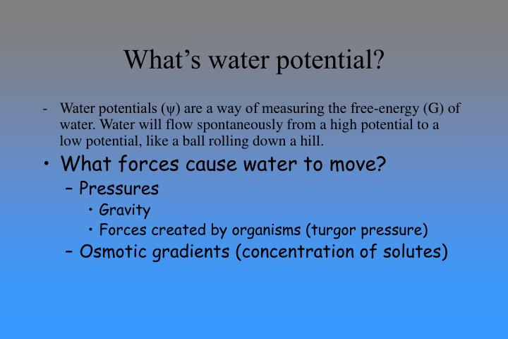 What's water potential?
