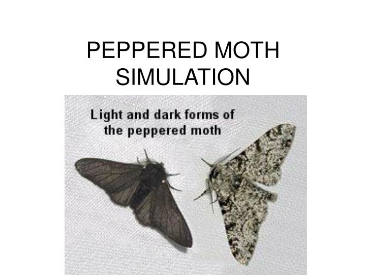 peppered moth simulation lab This is a classic simulation lab linking student prior knowledge about natural selection as a mechanism for evolution to our study of kettlewell's moth experiment.
