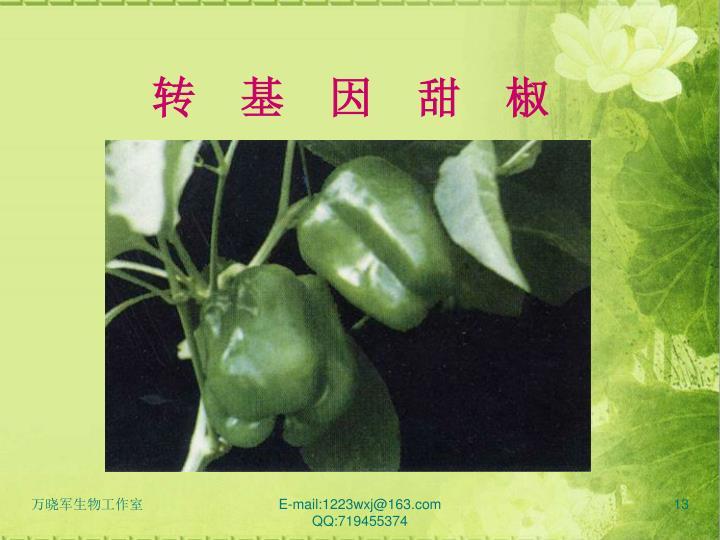 转  基  因  甜  椒