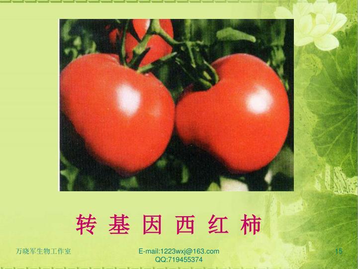 转 基 因 西 红 柿
