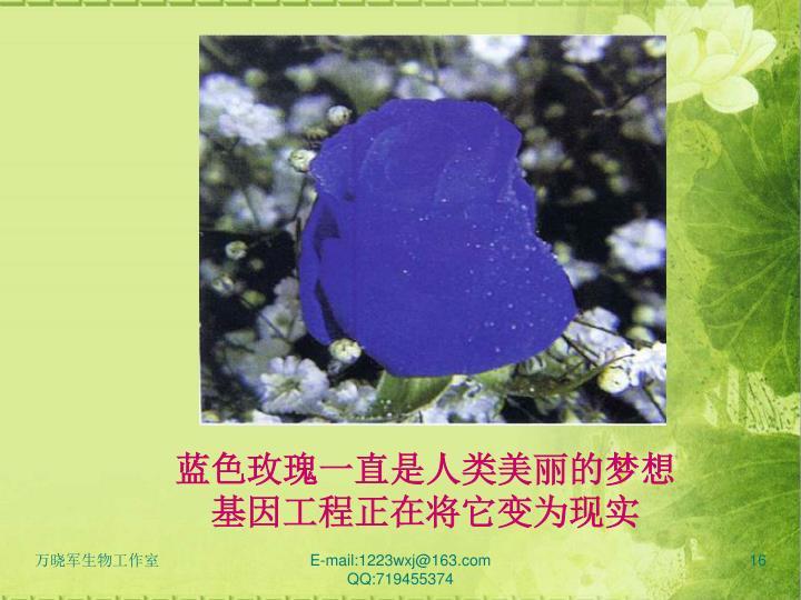 蓝色玫瑰一直是人类美丽的梦想基因工程正在将它变为现实