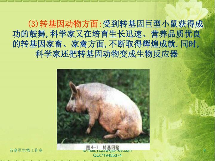 (3)转基因动物方面: