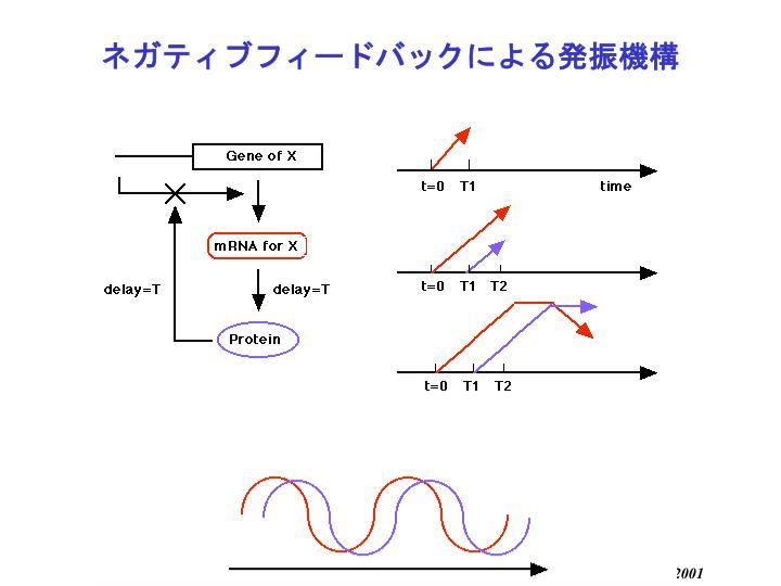ネガティブフィードバックによる発振機構