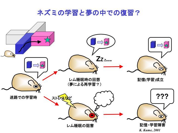 ネズミの学習と夢の中での復習?