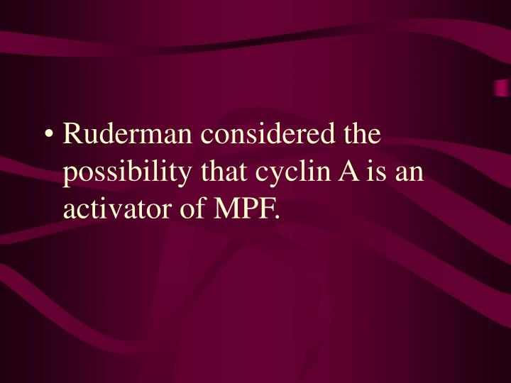 Ruderman considered the possibility that cyclin A is an activator of MPF.