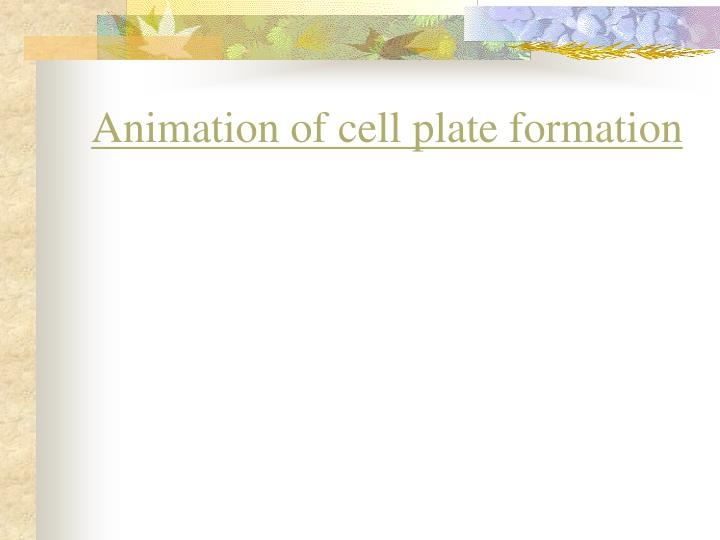 Animation of cell plate formation