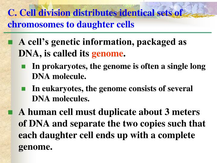 C. Cell division distributes identical sets of chromosomes to daughter cells