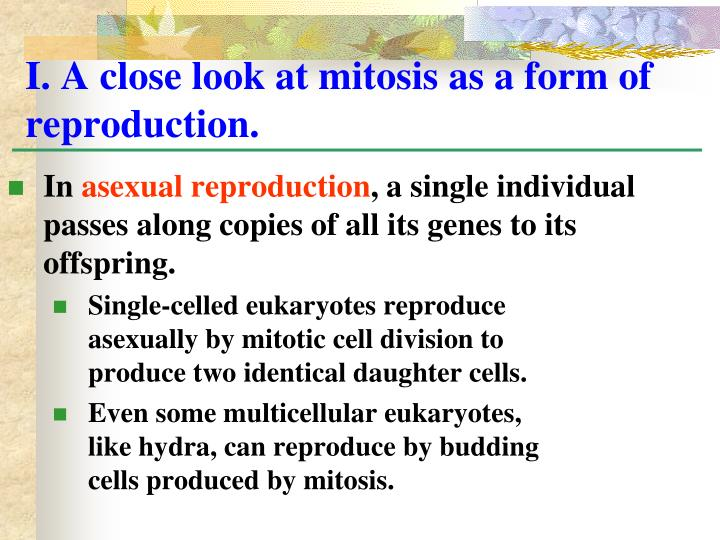 I. A close look at mitosis as a form of reproduction.