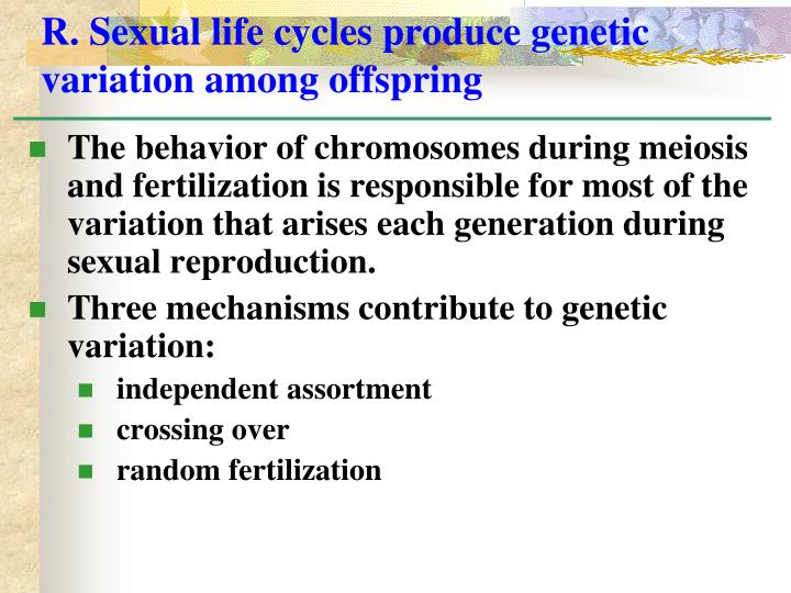 R. Sexual life cycles produce genetic variation among offspring