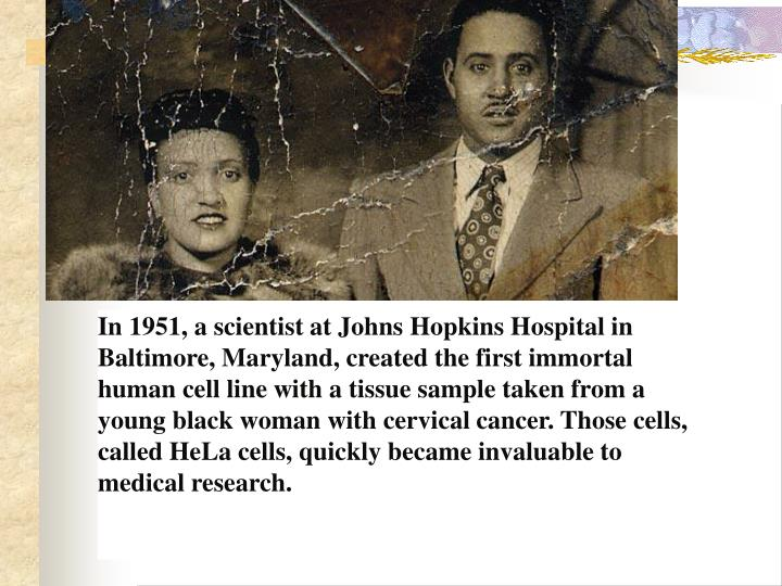 In 1951, a scientist at Johns Hopkins Hospital in Baltimore, Maryland, created the first immortal human cell line with a tissue sample taken from a young black woman with cervical cancer. Those cells, called HeLa cells, quickly became invaluable to medical research.