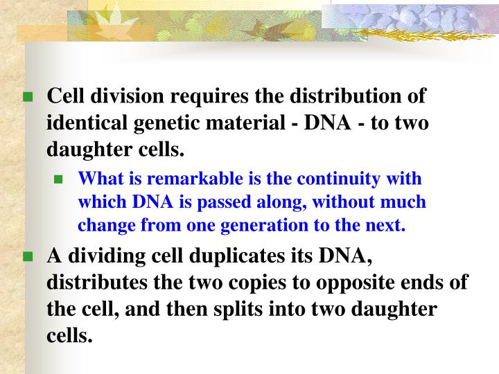 Cell division requires the distribution of identical genetic material - DNA - to two daughter cells.