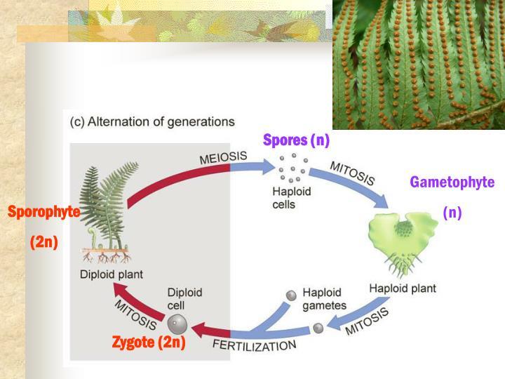Spores (n)