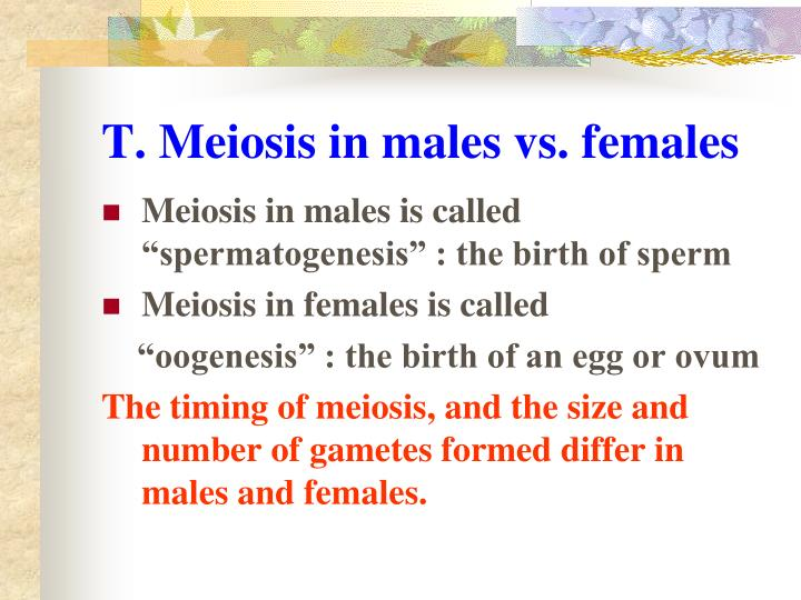 T. Meiosis in males vs. females
